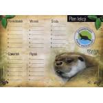 Plan lekcji- wydra